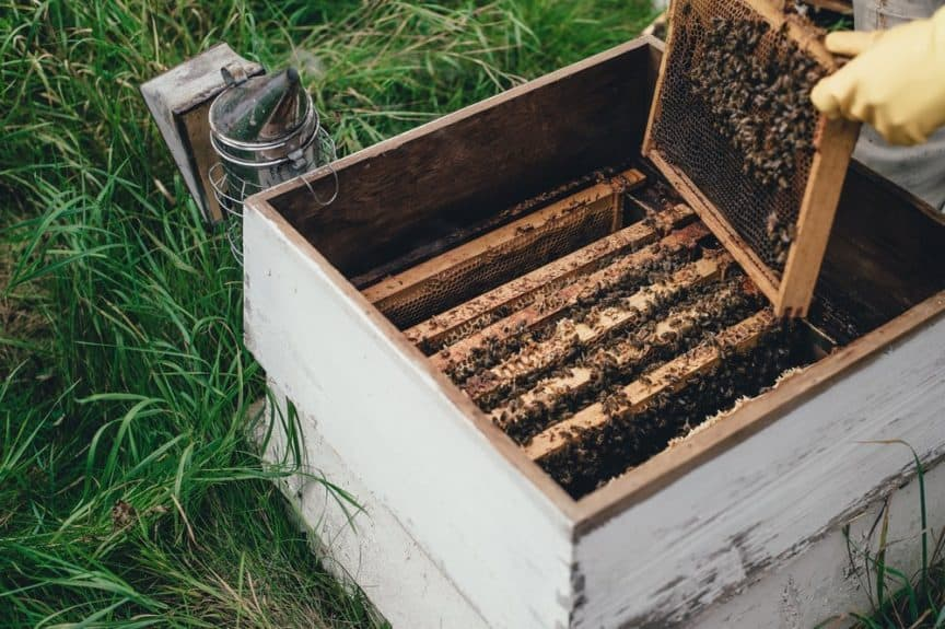 What Does It Take To Get Into New >> How Long Does It Take To Get Honey From A New Hive